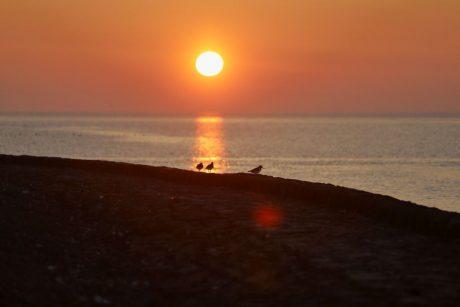 Austernfischer im Sonnenuntergang