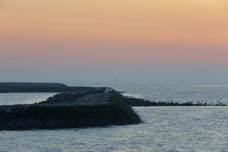 die Austernfischer begeben sich zur Ruhe